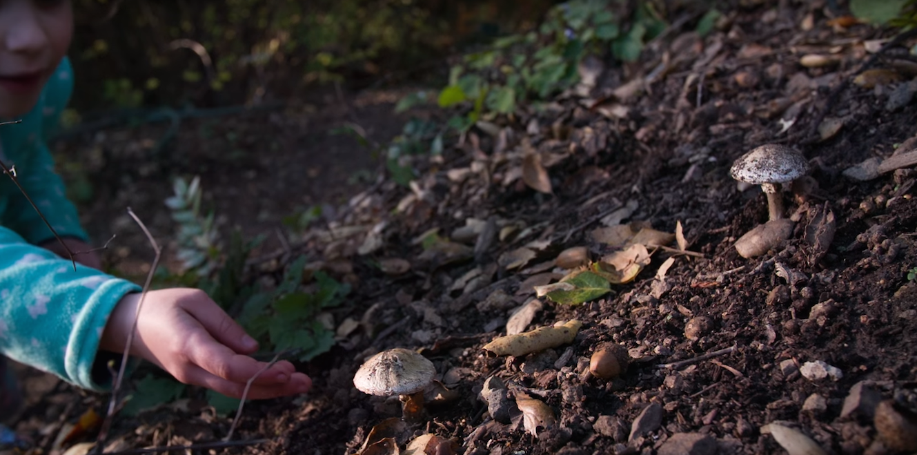 This Deadly Mushroom Can Kill Even Before You Realize It