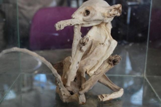 Bizarre mummyfied animal found in turkey