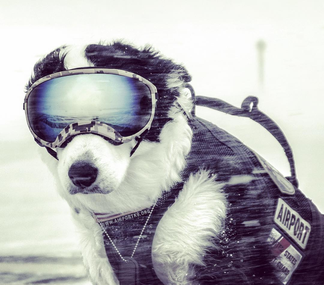 A Cool dog who has a website and a Facebook, Instagram and YouTube account