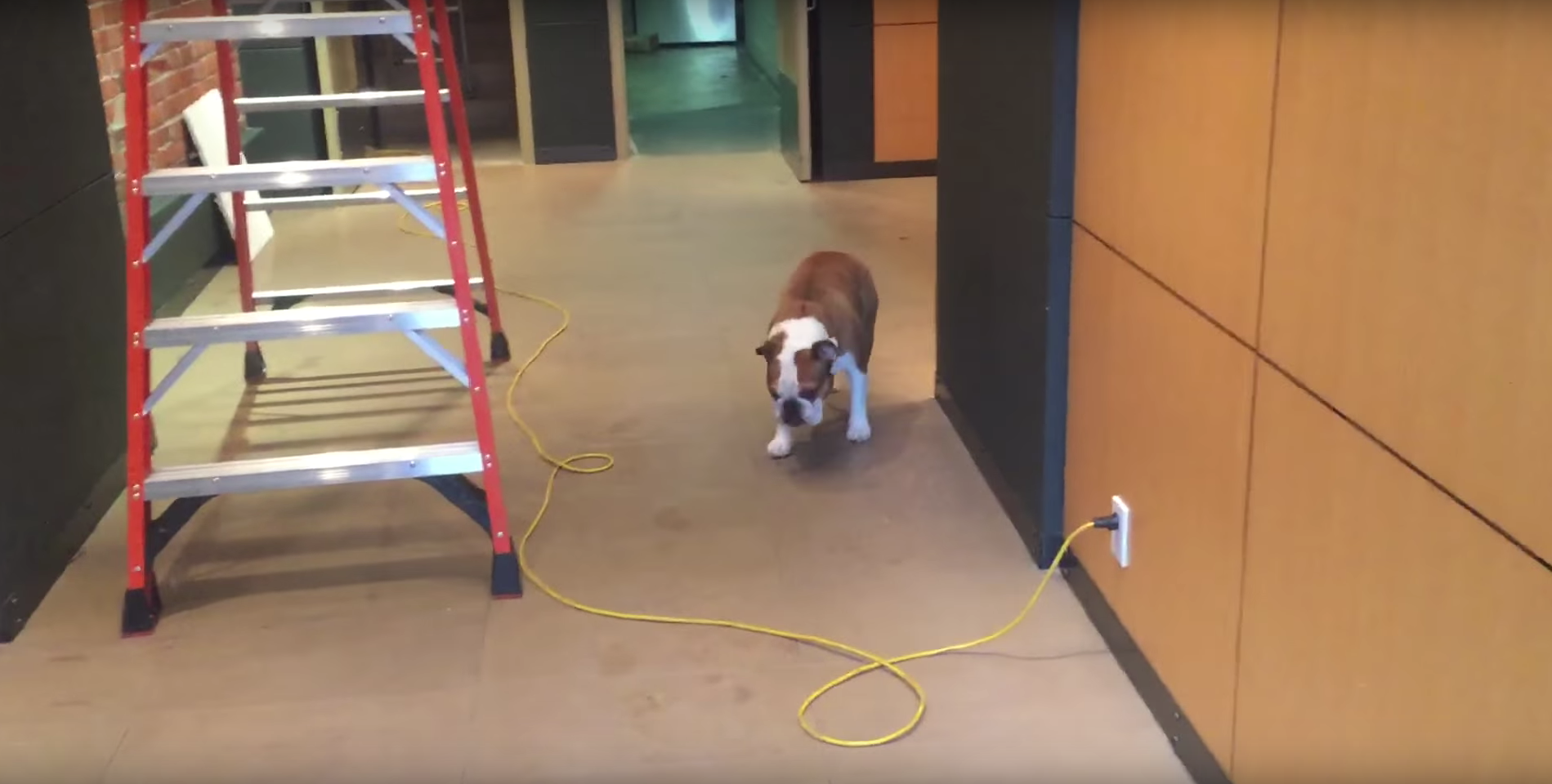 A Dog Who Feared Lot Of Things Learned How To Deal With Them In Strange Way