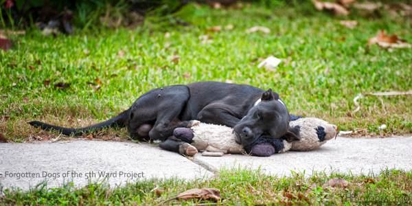 Stray Dog Resting WIth His Stuffed Toy