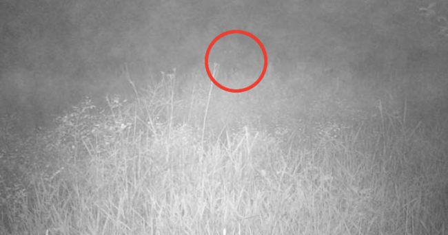 Something Creepy Caught on Trail Camera Footage