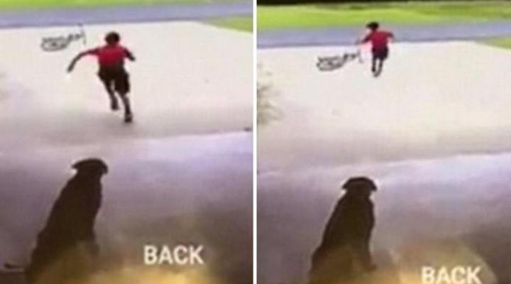 World's cutest trespasser caught doing something adorable