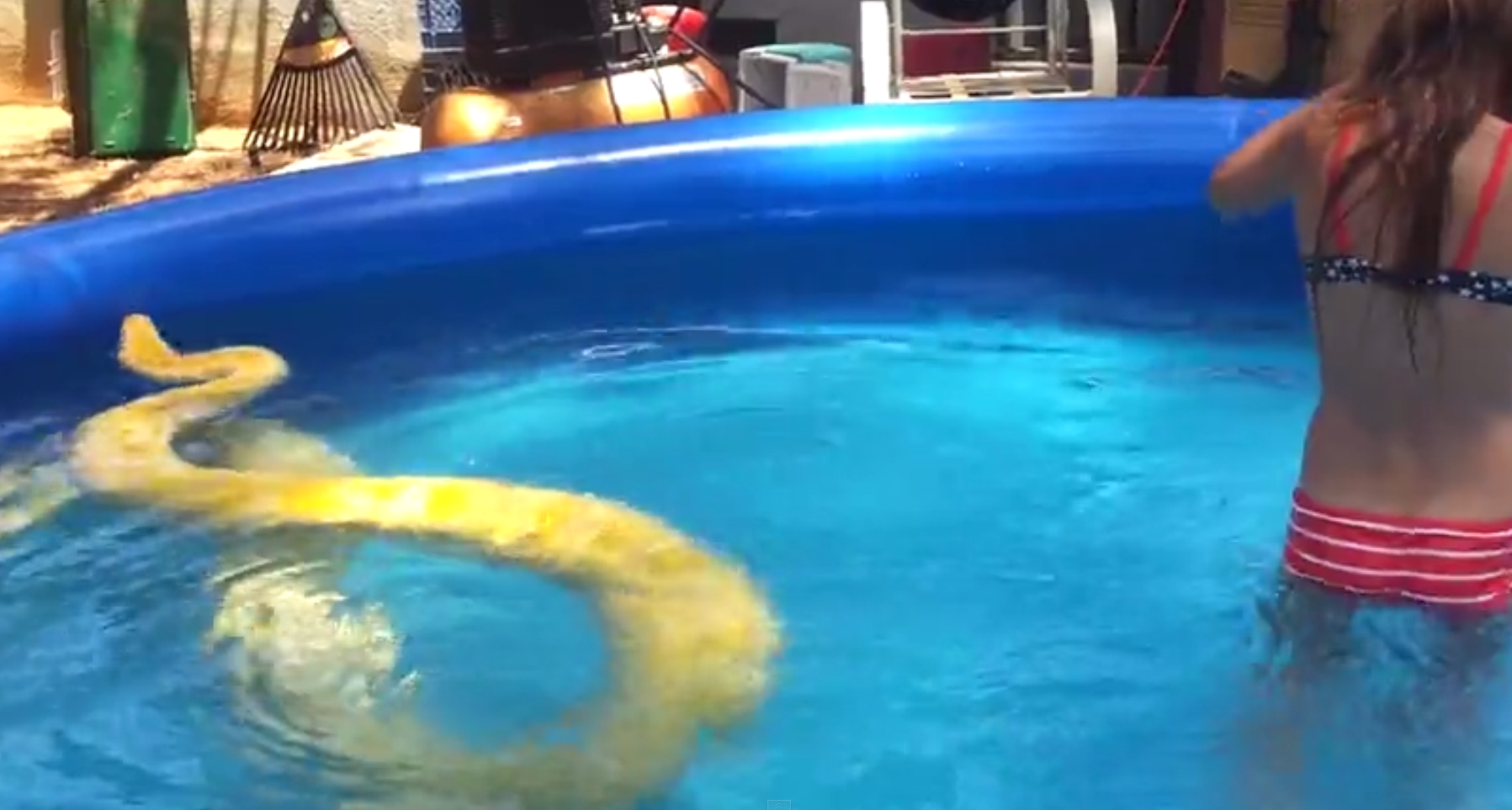 A giant python swimming in a pool with a kid just partying for Giant swimming pool