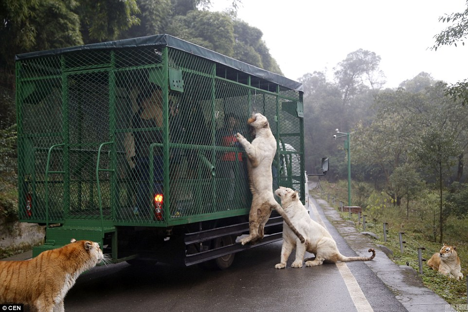 Zoo Where Humans are caged 5