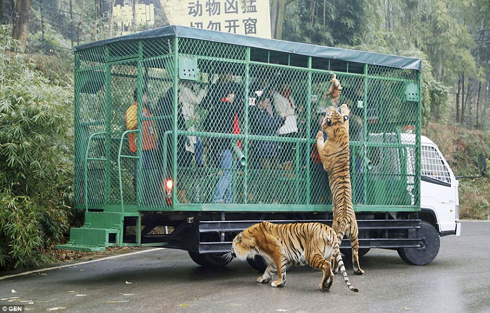 Zoo Where Humans are caged 2