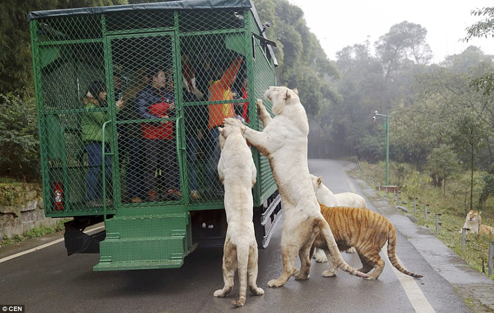 Zoo Where Humans are caged