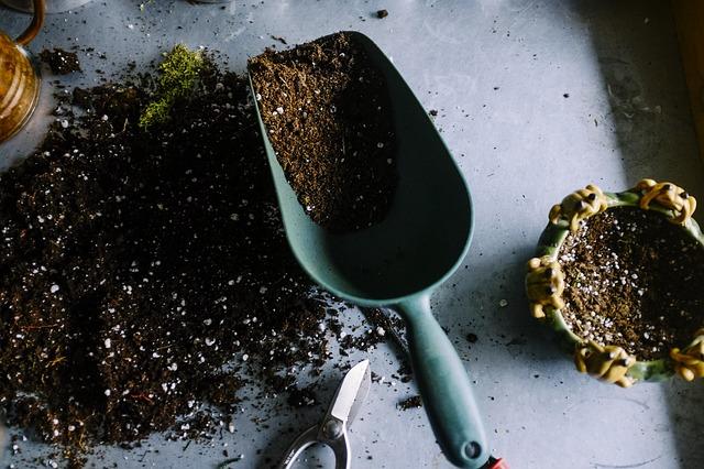 Soil | Growing an Avocado Tree From Scratch