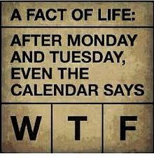 Monday Meme 14