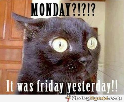 Monday Meme 26